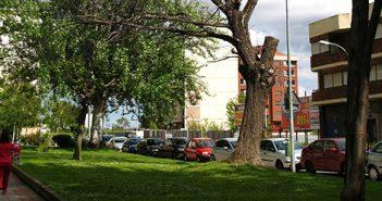 Árbol seco en Lobete, Logroño.